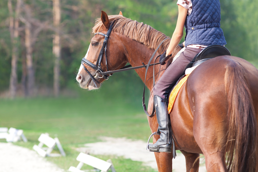 Where To Go Horseback Riding in Austin